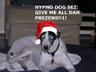 Hypno Dog