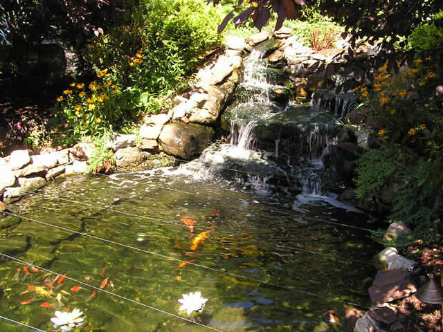 Pond and Falls