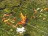 Fishies 2